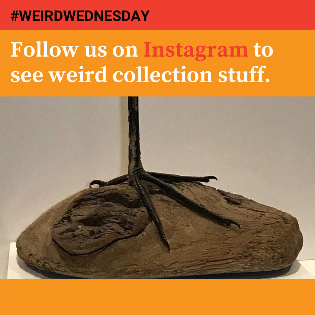 Follow us on Instagram to see weird stuff from the collection, like this bird leg.